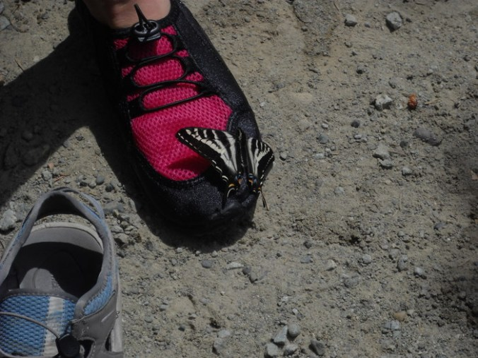 butterfly landed on her shoe